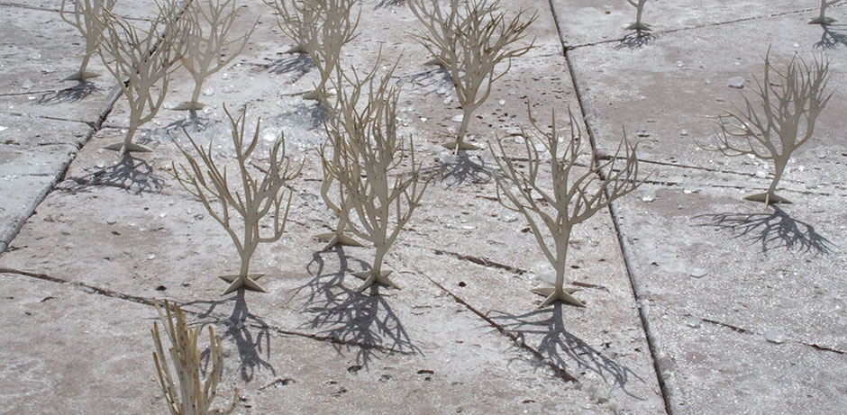 detail of miniature trees